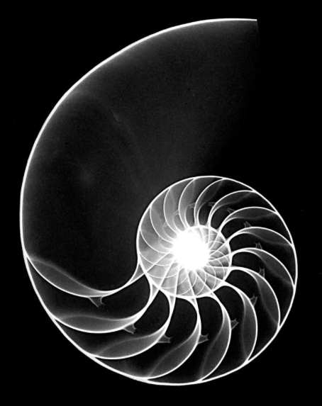 Nautilus shell art by William Conklin